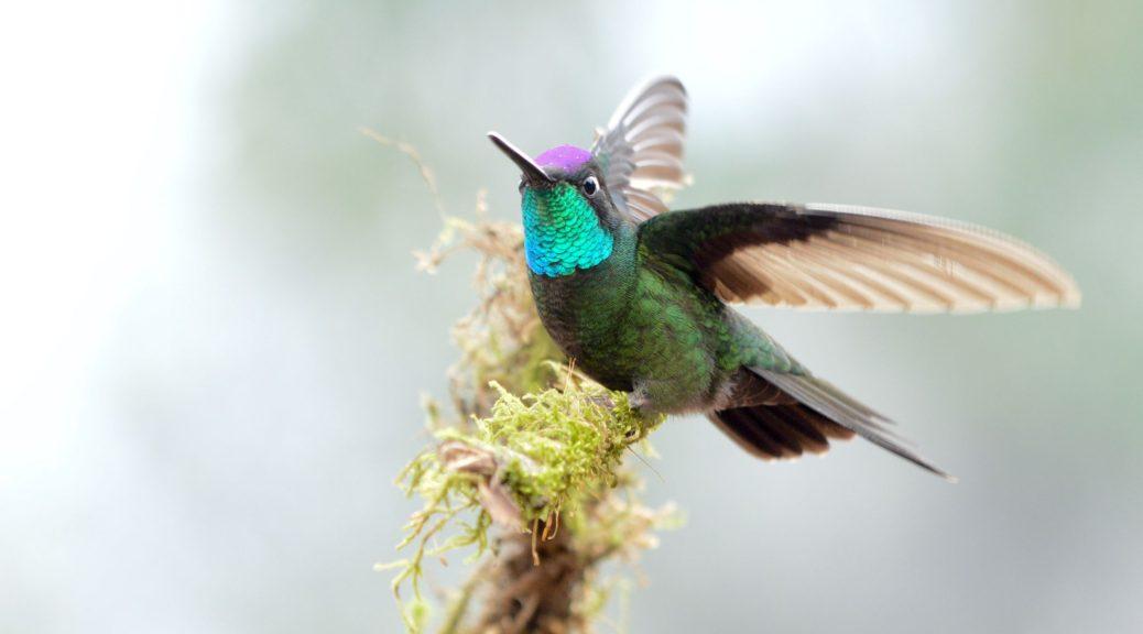 Birding Hobby