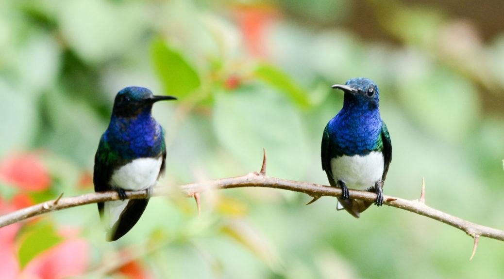 Custom Birding Tours