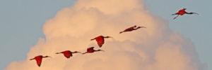 Birding the Asa Wright Nature Centre