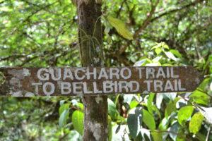 Birding Trinidad